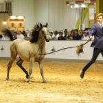 Horse Auction Timeline – How It Was Conducted Back in 1000 BC and How It Is Done Now?