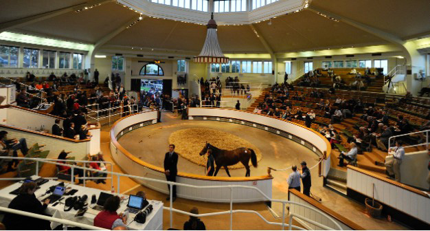 A horse auction by sales ring
