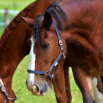 Best Horse Auction Sites To Look For