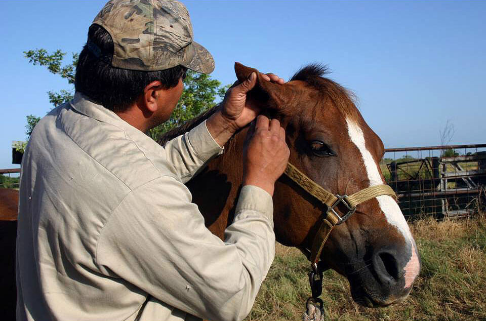 Man personally inspecting a horse