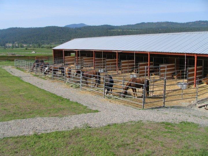 Horses feeding