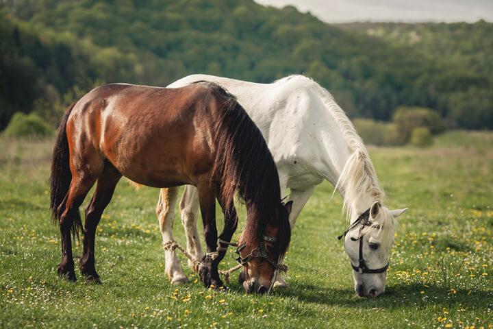Well known Tricks To Buy Horses for Cheap » High Country Horses AN93
