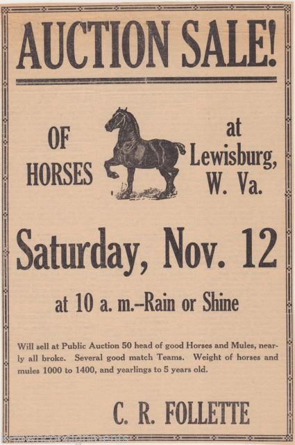 Horse auction advertisement sample