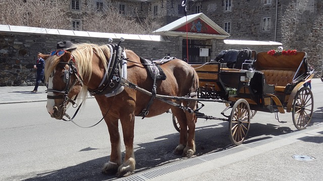 Horse with carriage attached