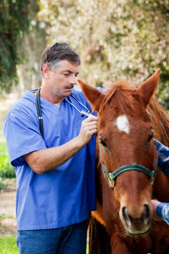 Veterinarian checking a horse