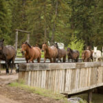 Horse Ranches for Sale in The US
