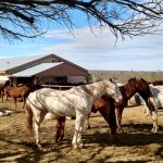 Horse Ranch In Arizona Is A Family Tradition